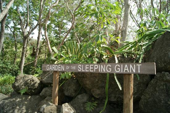 garden-of-the-sleeping