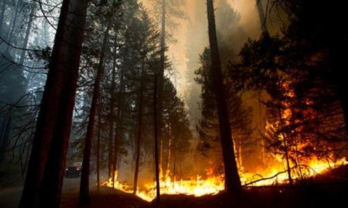 Wildfires started by Al-Qaeda as economic warfare against America