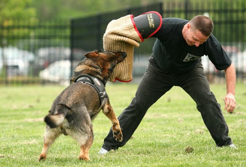 Protection Dog Training South Florida