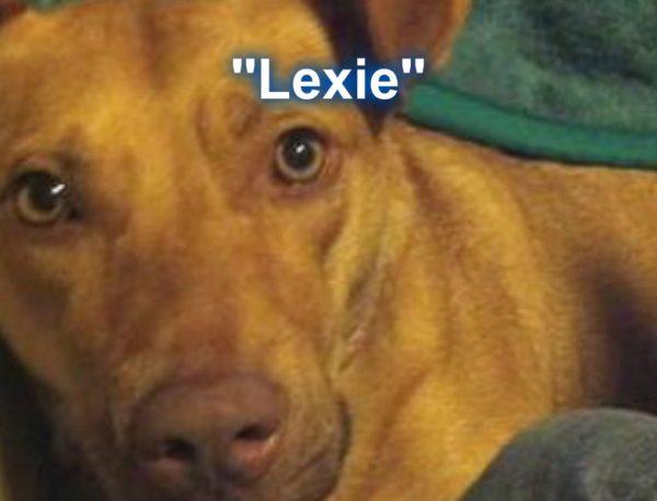 lexie Brittany Preston