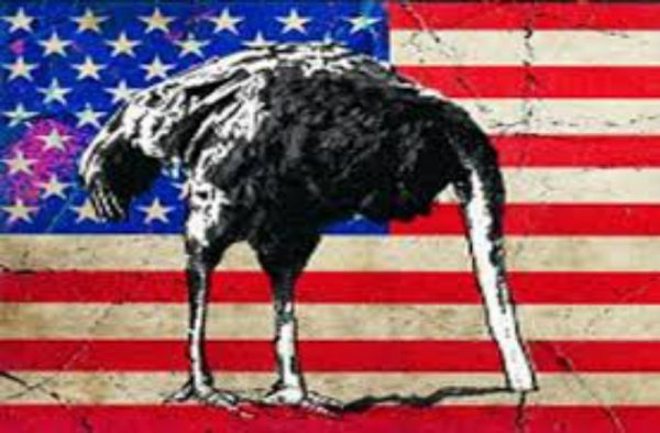 ostrich head in sand american flag