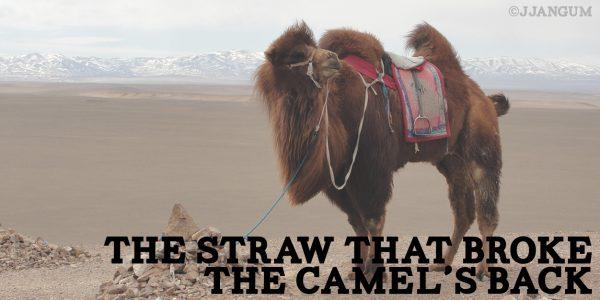 camel's back 2