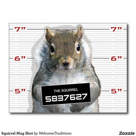 Squirrel-Mug-Shot-Facebook-Shelby-Township-Police-Department-460x460