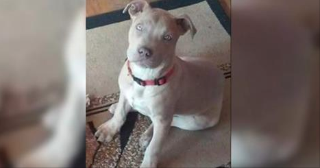 Cop Shoots Woman's Dog, Department Apologizes by Filing Charges Against Her