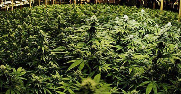 Narcotics Sheriff Deputy Caught Trafficking Nearly 250 Pounds of Marijuana