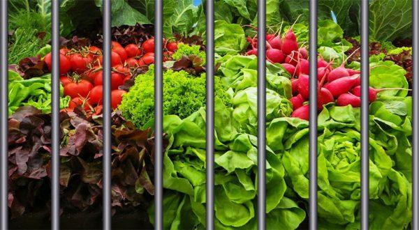 fl_growing_vegetables