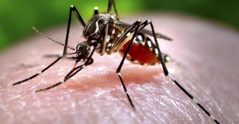 All U.S. blood supplies to be tested for Zika Virus; theme parks, crowded public places, now offering repellent