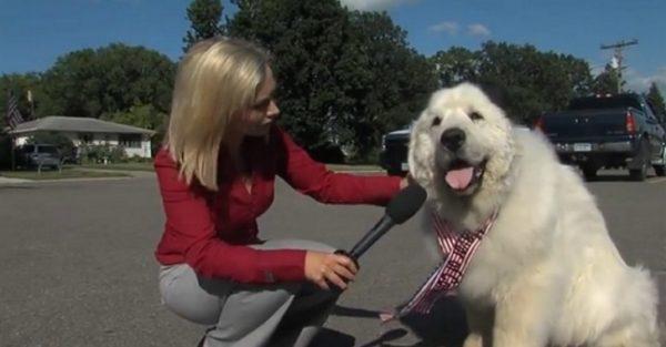dog-mayor