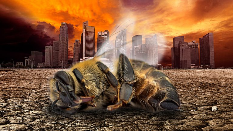 Insect population COLLAPSE a death warning for all humanity