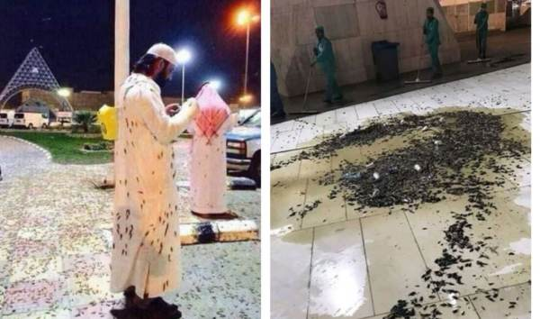 "Signs Of The Times? A Plague Of Locusts Hits Mecca And Earth's Magnetic Pole Is Experiencing A ""Sudden Shift"""