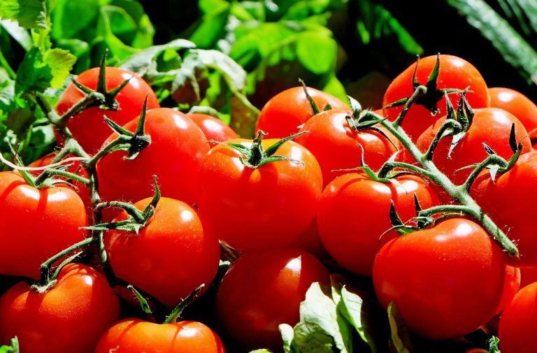 SWAT Raids Innocent Kansas Family Over Growing Tomato Plants — Taxpayers Liable
