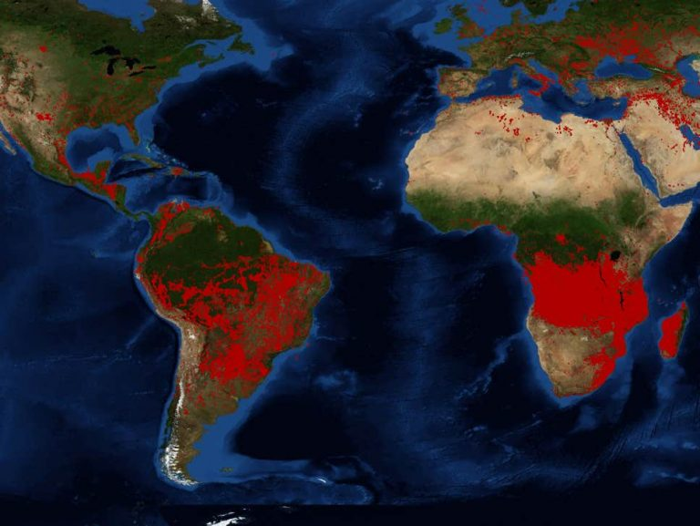 Experts Brace For An Apocalyptic Future As Earth's Forests Burn To The Ground