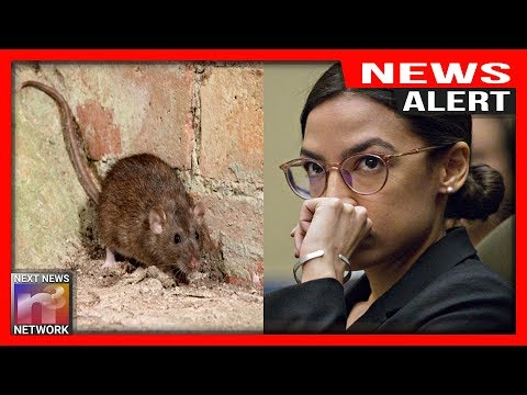 Bad News for AOC, MAGGOT INFESTED District EXPOSED – While She's Yapping About the Border!