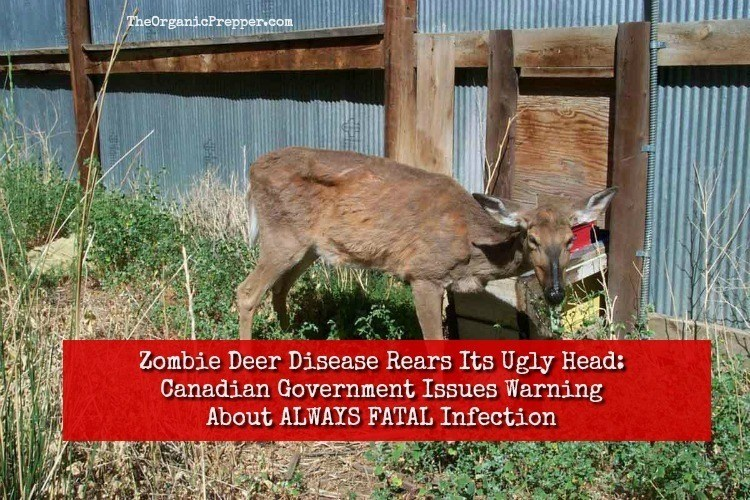 Zombie Deer Disease Rears Its Ugly Head: Canadian Government Issues Stark Warning About ALWAYS FATAL Infection