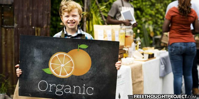 Preschool's Vegetable Stand Shut Down by Gov't Officials for 'Zoning Violations'