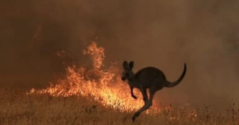 Climate Change? Nearly 200 People Arrested Across Australia For Deliberately Starting Bushfires