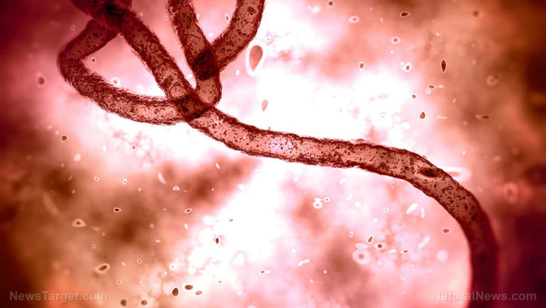 Staged Ebola pandemic being prepped for America, followed by mandatory vaccines using LIVE viral strains