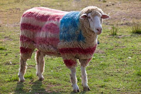 "JUDGE NAPOLITANO: ""AMERICANS MUST STOP ACTING LIKE SHEEP!"""