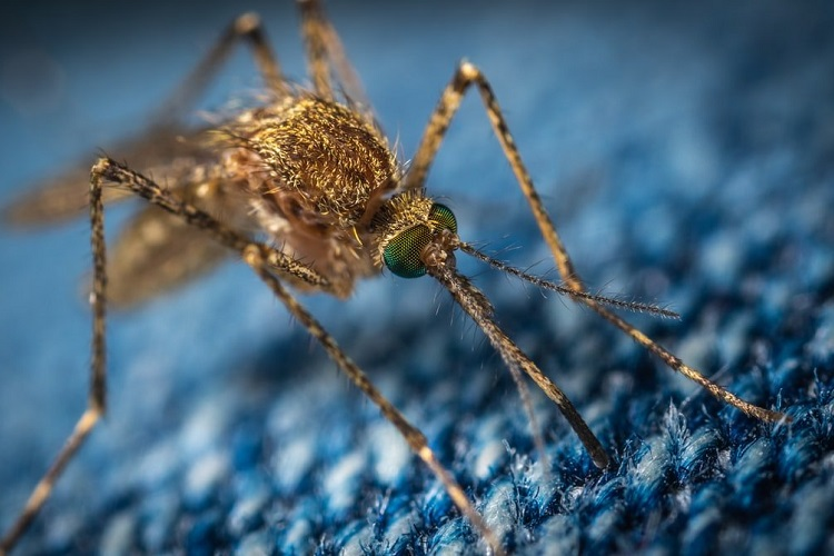 SCIENTISTS ARE ABOUT TO RELEASE MILLIONS OF GENETICALLY MODIFIED MOSQUITOS IN FLORIDA AND TEXAS