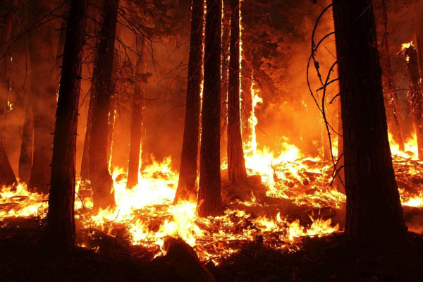 11 Facts That Prove That The Apocalyptic Wildfires On The West Coast Are Unlike Anything We Have Ever Seen Before