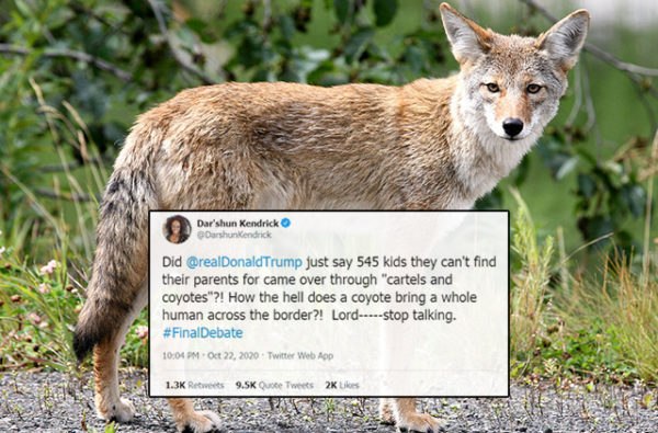 Dem Lawmaker Slams Trump: 'How The Hell Does A Coyote Bring A Whole Human Across The Border?!'