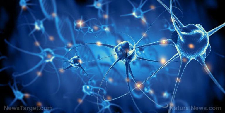 "Do covid vaccines contain GMO ""Magneto"" protein capable of remotely controlling behavior, brain activity?"