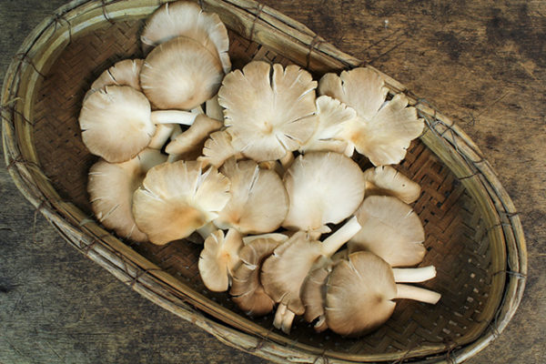Study finds that consuming more edible mushrooms lowers cancer risk
